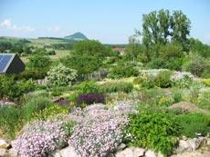 Duft- und Schaugarten der Kräutergärtnerei Syringa