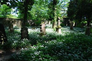 2 Friedhof