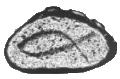 Logo Männervesper im Hegau e.V.