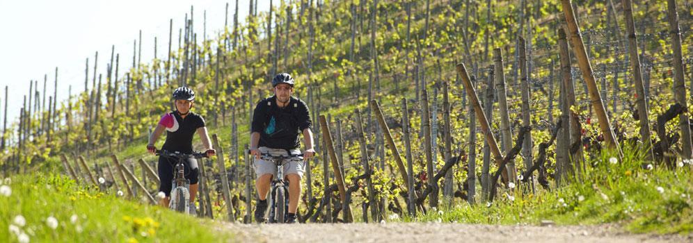 Weinbau im Hegau